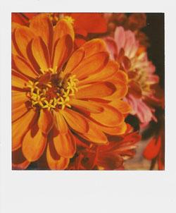 Polaroid Instant pic by Kim Oberski