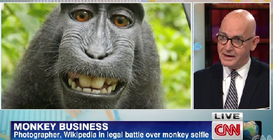 A media law expert (right) opines on CNN regarding the gripping monkey selfie copyright issue